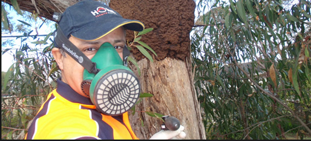 Termites Inspection