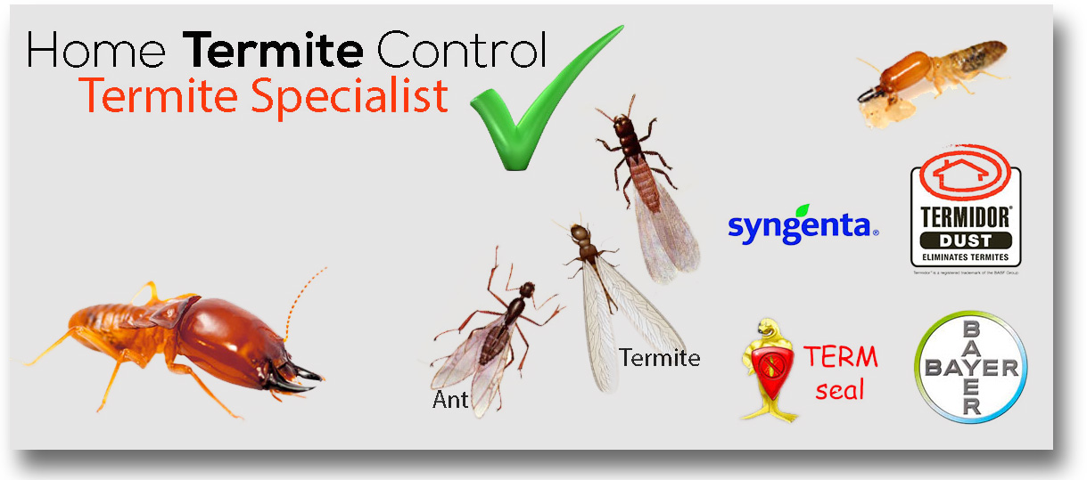 General Pest Termite Control Tips, Management and Termite Prevention Control.
