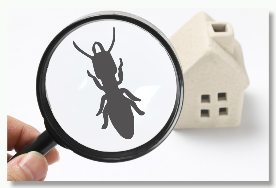 Real estate termite inspection before buying a house. Hire a professional termite inspector before purchasing a house.