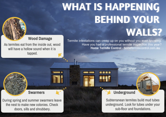 Home Termite Control & Inspection in Sydney by Brad Iranzadi infographic - wood damage, termite swarmers and subterranean termites