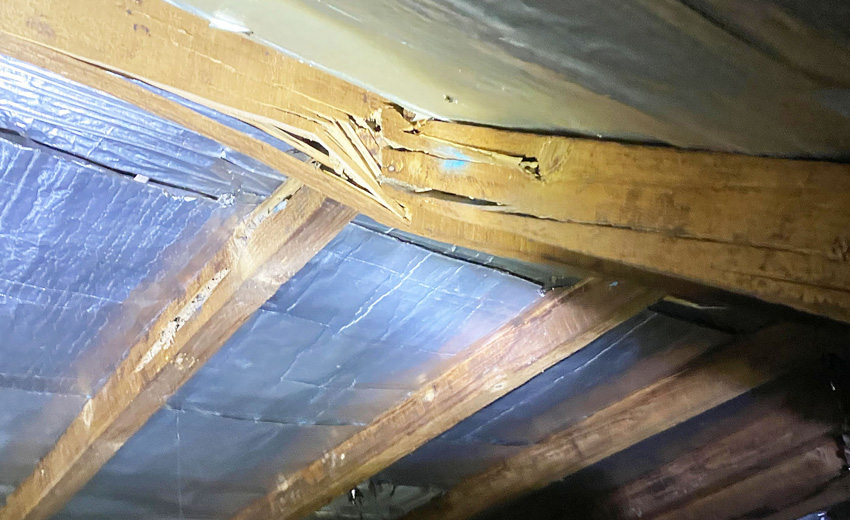 Termite wood damage in beams of house in Sydney -Selling a Termite Infested House Home with Termite Damage