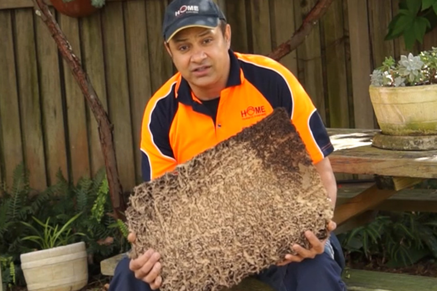 Termite Nest Found Under Floorboards. Worried about Buying a House with Infestation?