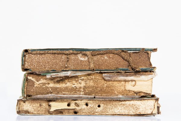 Termites Eating through book - White Ant Infestation termites in House, Active Termite Infested Wood.
