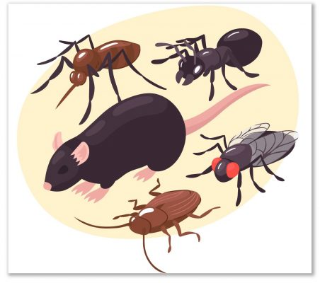 Electronic Pest Control Repellent Devices, High-Frequency Pest Control that does not work in homes