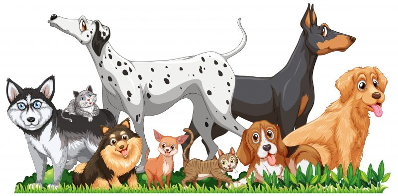 Pest Control Frequency Devices and Treatment that are pet friendly in Sydney Australia