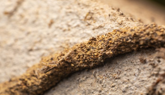 Termite Poo, Early Signs of Termite Damage in Drywall, Evidence of Termites in Homes. What Are Early Signs of Termite Damage?