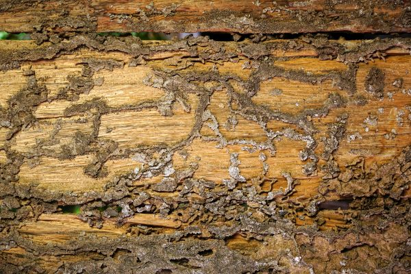 Early Signs of termite damage, early stage signs of termites in ceiling and damage drywall