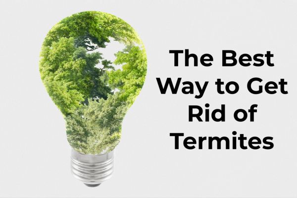 Best way to get rid of termites, finding termite treatment options, advanced pest control. Contact us to get rid of termites from your home.